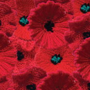 Poppies knitted by Lesley Abrahams