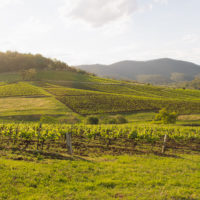 Tyrrell's Vineyards - The Old Patch